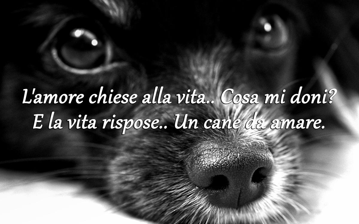 Frasi Simpatiche Sui Cani Migliori Frasi Del Catalogo